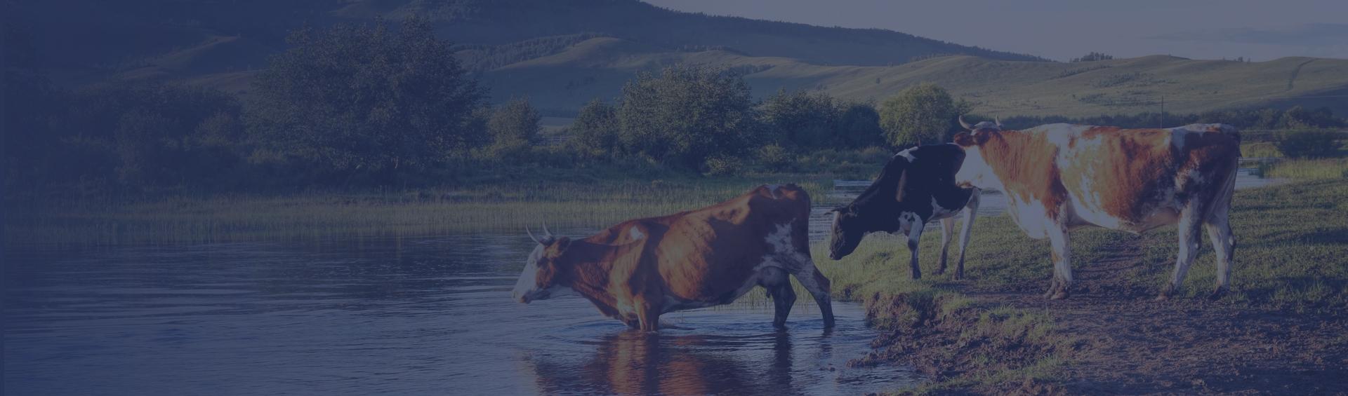農林牧副行業解決方案分類背景圖
